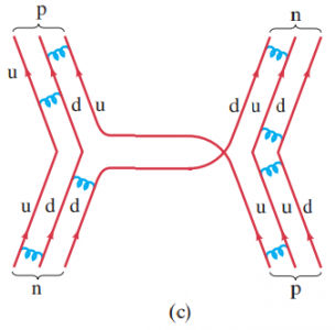 (c) Quark representation of the same interaction neutron + proton -> neutron + proton. The blue coiled lines between quarks represent gluon exchanges holding the hadrons together.