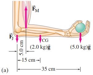 Example 9–8, forces on forearm.